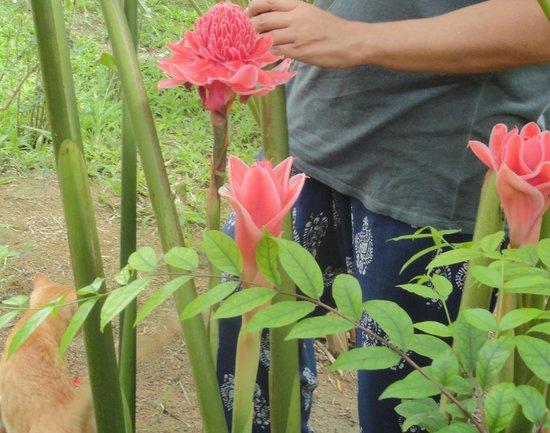 Florist Resort: Этлингера высокая, Имбирь-факел, Пламенная лилия, Фарфоровая роза, Филлипинский восковой цветок