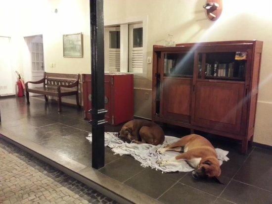كاستيلينو 38: Beide Hunde vom Hotel