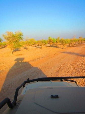 Wildlife drive