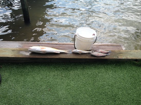 Ponce Inlet Watersports: Catch of the day