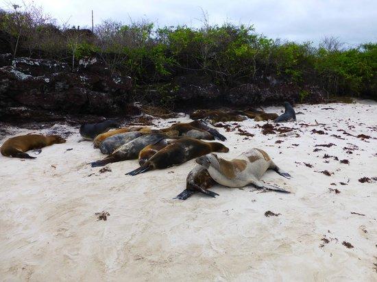 Puerto Chino Beach : sea lions