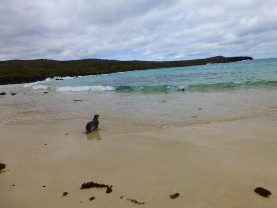 Puerto Chino Beach : gorgeous beach