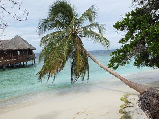 Bandos Maldives: Bandos sembra una cartolina!
