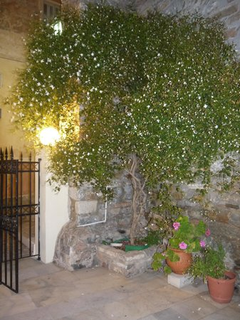 Hotel Ethrion: 入口の花が夜になると香ってました