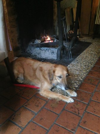 Le Roc du Boeuf : Freddie looking very comfortable by the fire!