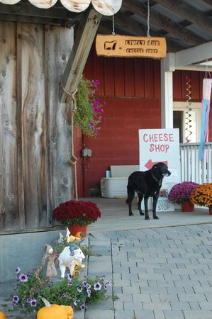 Juniper Hill Bed & Breakfast: Local goat cheese farm - Lively Run.  SO good!