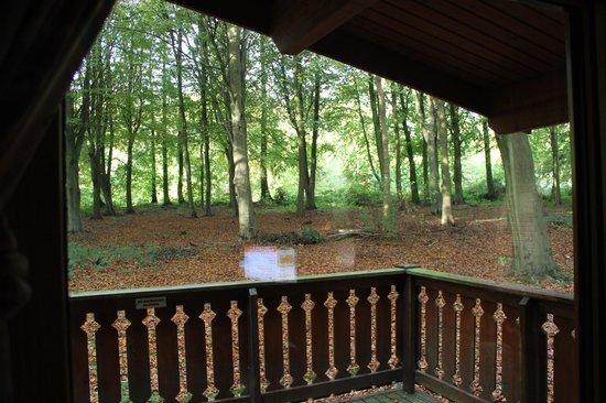 BEST WESTERN PLUS Kenwick Park Hotel: Balcony view to the woods