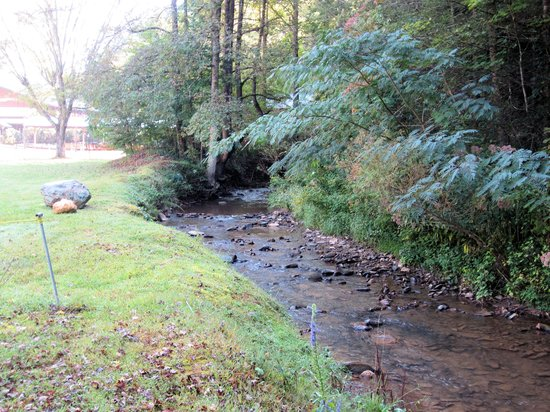 Camping in the Smokies: The stream behind our site