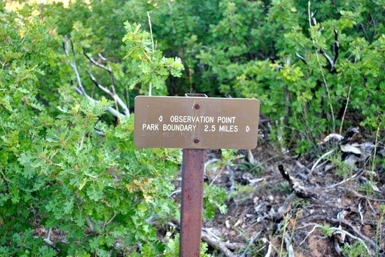 Observation Point: sign