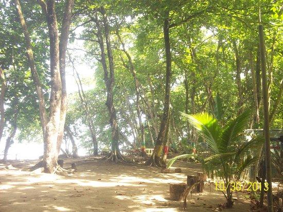 Cabinas Coconut Grove: the beautiful area near the hotel