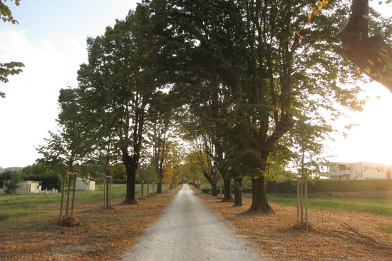 Relais Bellaria Hotel & Congressi : The long beautiful driveway leading to the hotel.