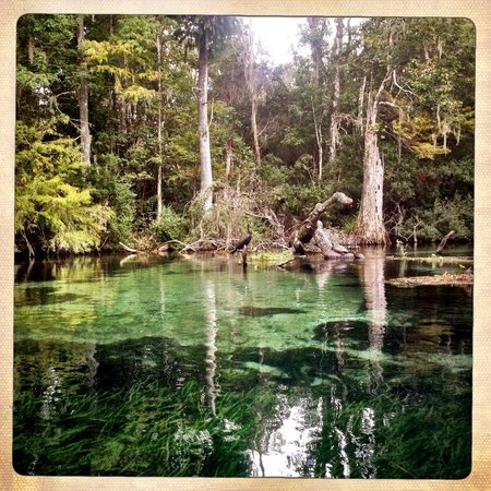 Rainbow River Kayak Adventures: Beautiful Rainbow River