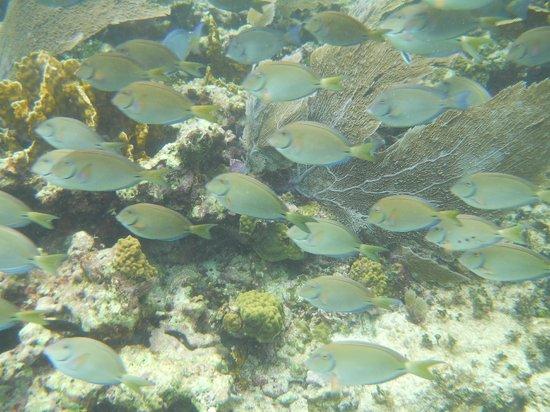 The Snorkel Shop: Snorkel Trip to Puerto Moreles