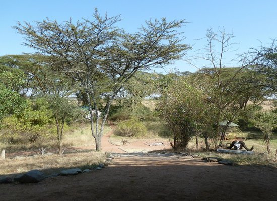 Porini Mara Camp: Camp