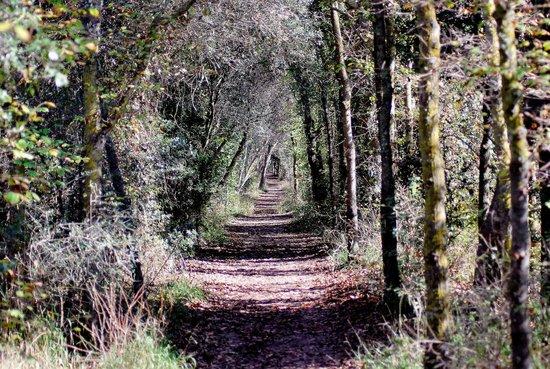 Parque natural s'Albufera de Mallorca: woodlands walk