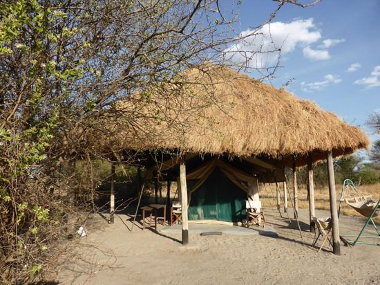 Whistling Thorn Tented Camp : VIEW OF TENT