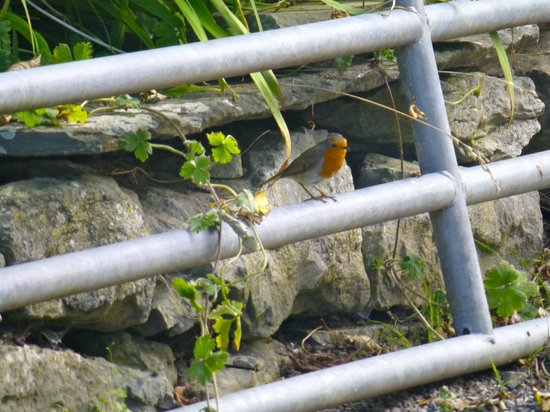 Churchfield B & B: Robin