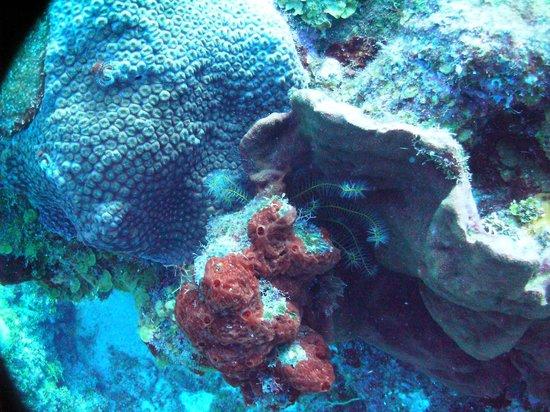 Liquid Blue Divers : Coral is so pretty in Cozumel