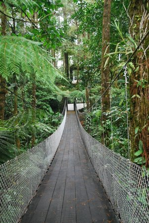 Arenal Observatory Lodge & Spa: Suspension bridge to the rooms and swimming pools