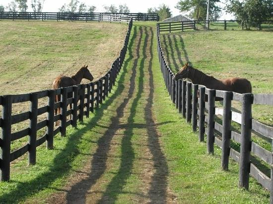 Old Friends at Dream Chase Farm: Add a caption