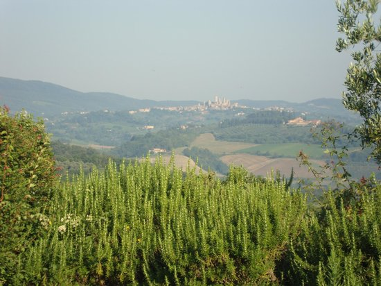 Podere il Pino : View from the patio of Villa no. 9