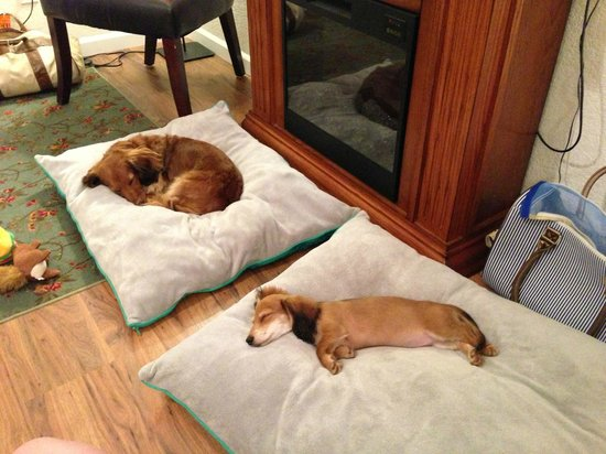 Cypress Creek Cottages: Dachshunds enjoying the VIP treatment