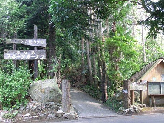 Yakushima Fruit Garden: 入口