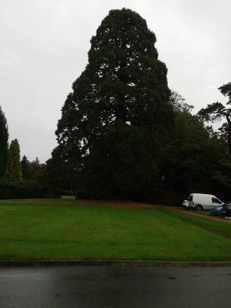 Copthorne Hotel Effingham Gatwick: entorno