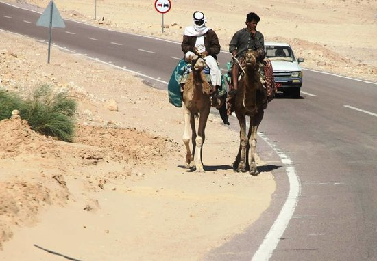Sinai At Its Best Day Tours: Meanwhile, along the highway...
