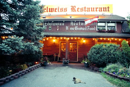 Edelweiss Restaurant: A friendly cat outside the restaurant.