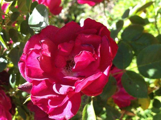 Victoria House Motor Inn: Roses everywhere