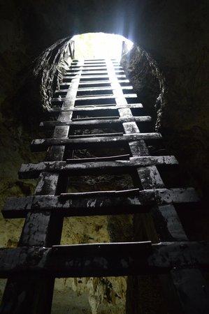 La Calypso Dive Center: Ladder to Cenote / セノーテまでのはしご