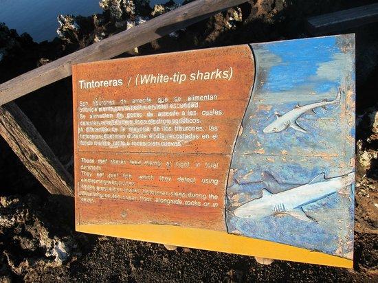 Las Tintoreras: sharks sign
