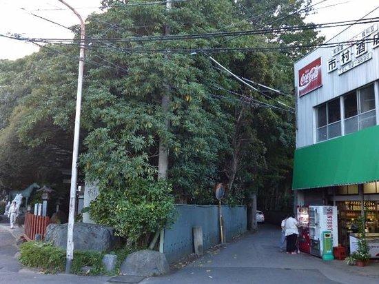 Suwa Shrine : 神社横の酒屋さんも、いい雰囲気です