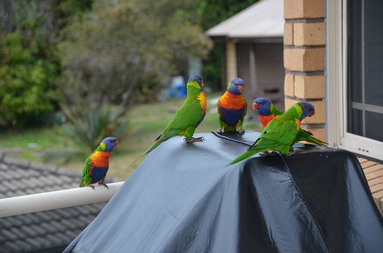 The Mitchells Waterfront Bed & Breakfast : Morning Visitors