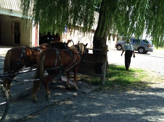Abe's Buggy Rides : horses