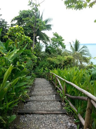 Lapa Rios Ecolodge Osa Peninsula: The path down from the pool to the rooms- like a dream!