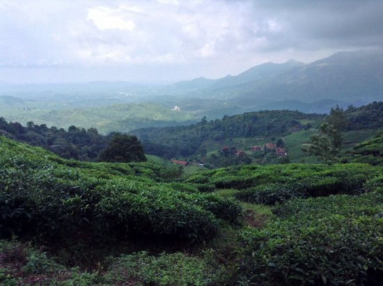 Grassroots Wayanad : Great views