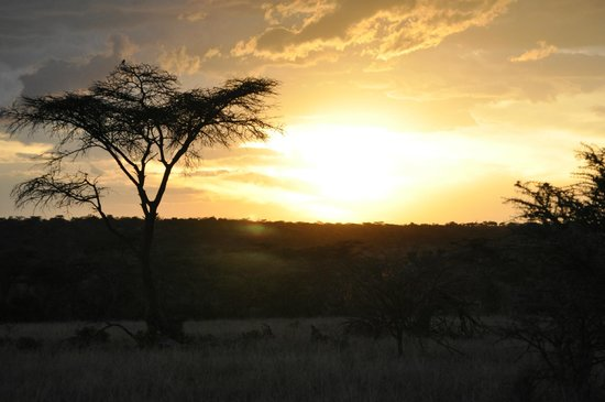 Encounter Mara Safari Camp by Asilia Africa: Sunset over Masai Mara, Kenya