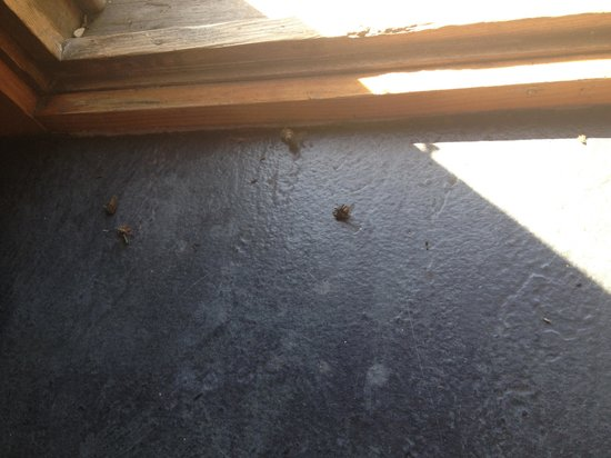 krinklewood Cottage & Carriages : Yep, more dead flies.