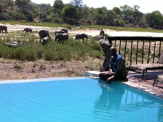 Umkumbe Safari Lodge: No need for a game drive.  This is a game swim!