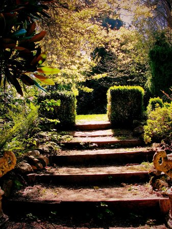 The gardens at Arnica Views