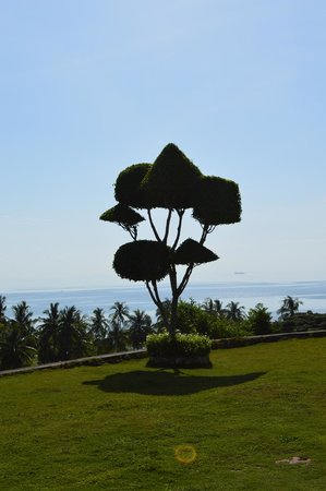 Bodos Bamboo Bar Resort: designed tree