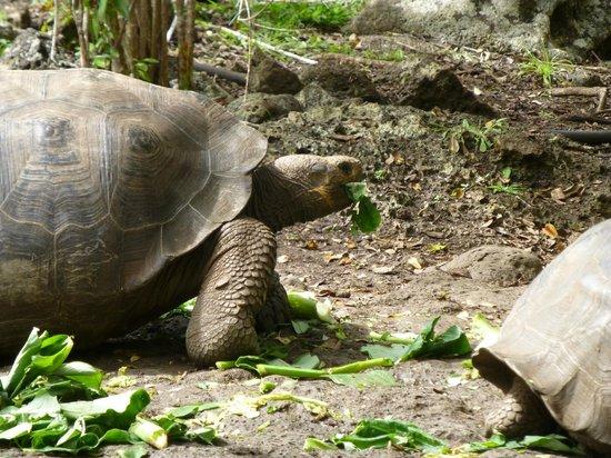 Galapaguera de Cerro Colorado: Beautiful creatures