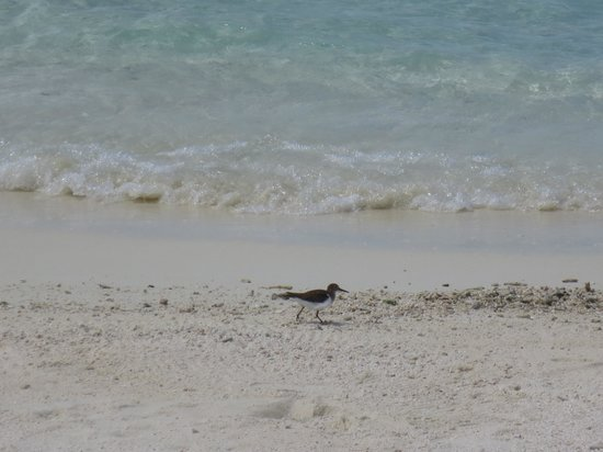 Baros Maldives: Bird