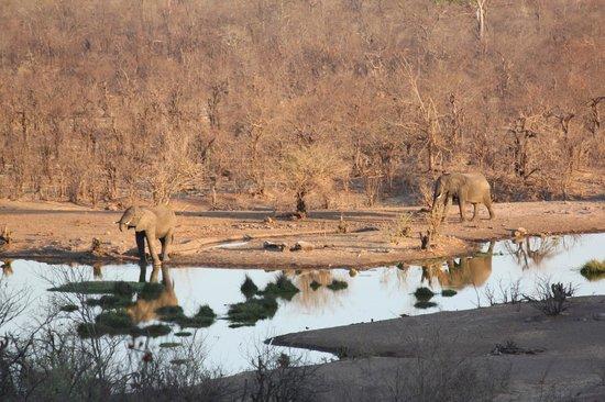 Victoria Falls Safari Club : Vue exceptionnelle et dépaysante