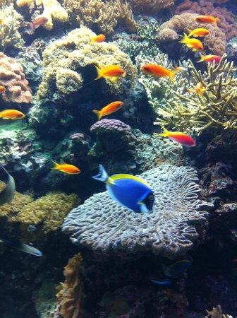 リスボン海洋水族館