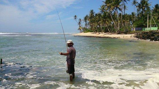 Beach Inns : fishing nearby