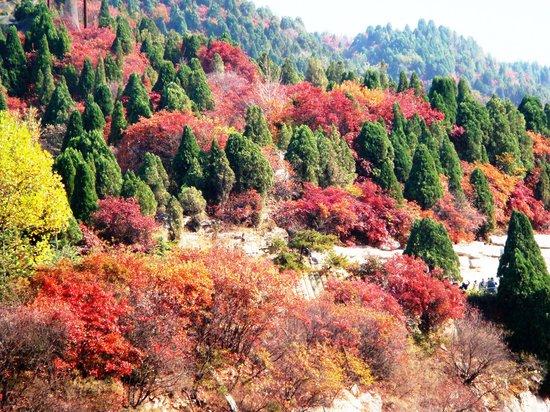 Red Leaf Valley
