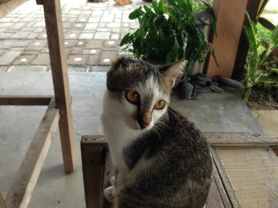 Soluna Guest House: Lovely cats